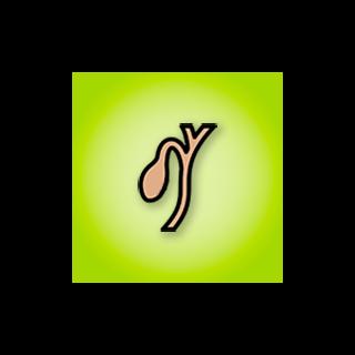 Žlčník